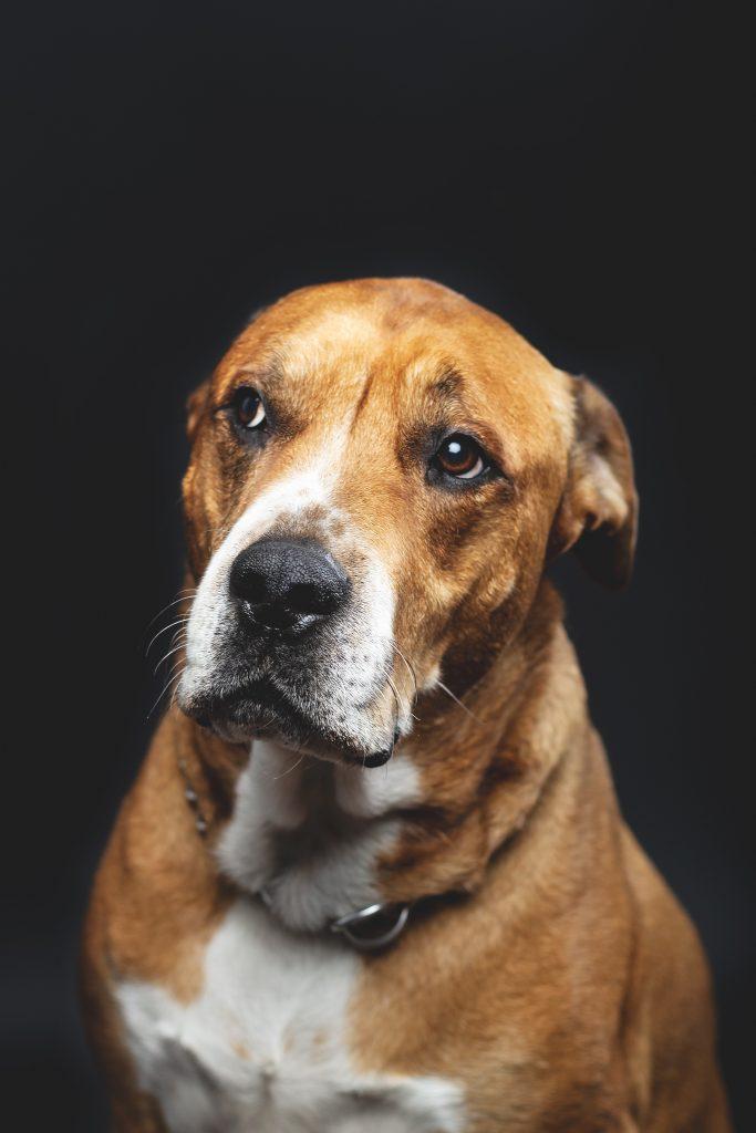 De innerlijke wereld van honden